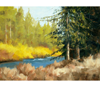 "Link to ""Metolius River, Oregon"" by Cal Capener"