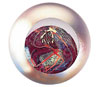 Link to Mars Paperweight by Glass Eye Studio