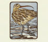 "Link to ""Long-billed curlew"" print by Chandler O""Leary"